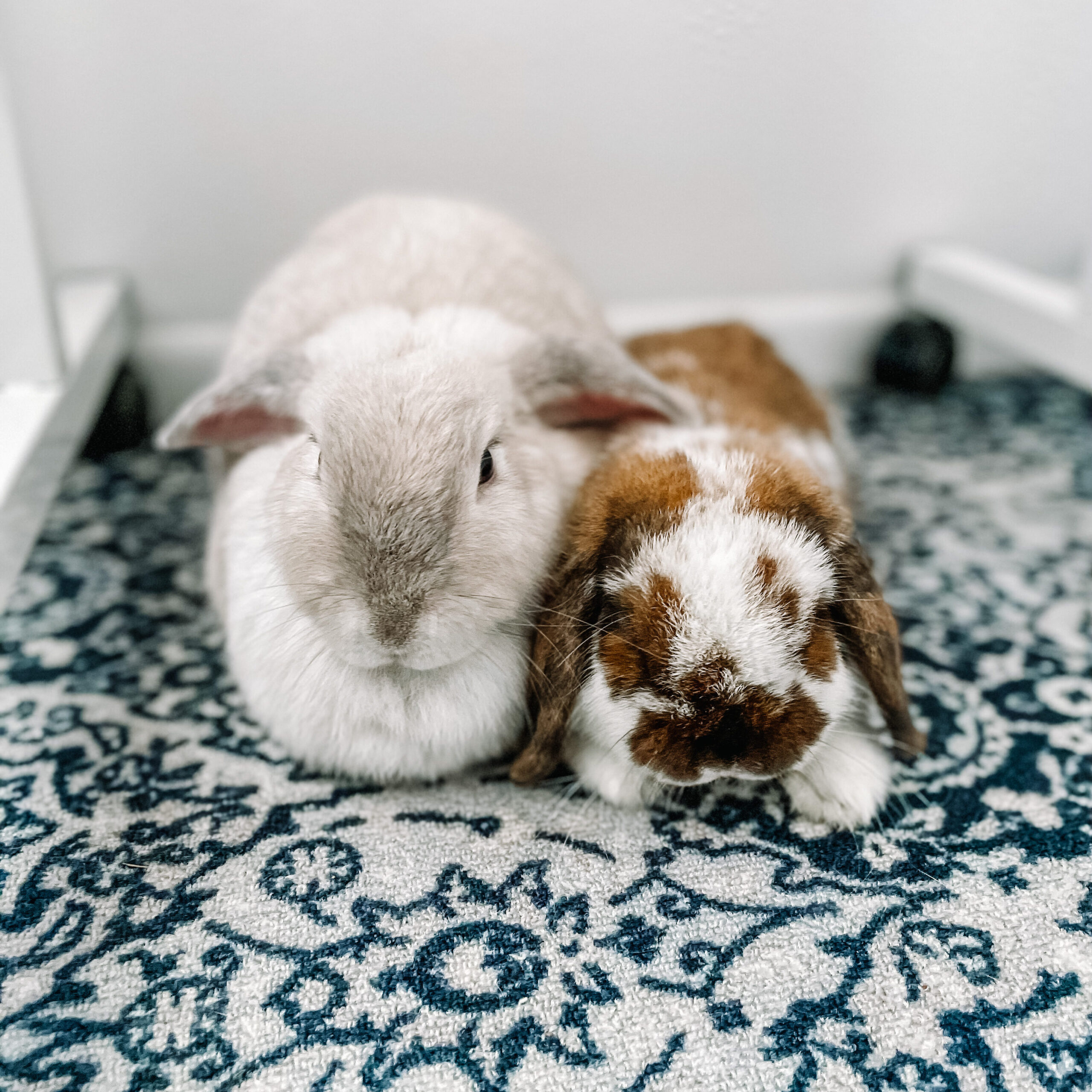 thyroid dietitian's bunnies
